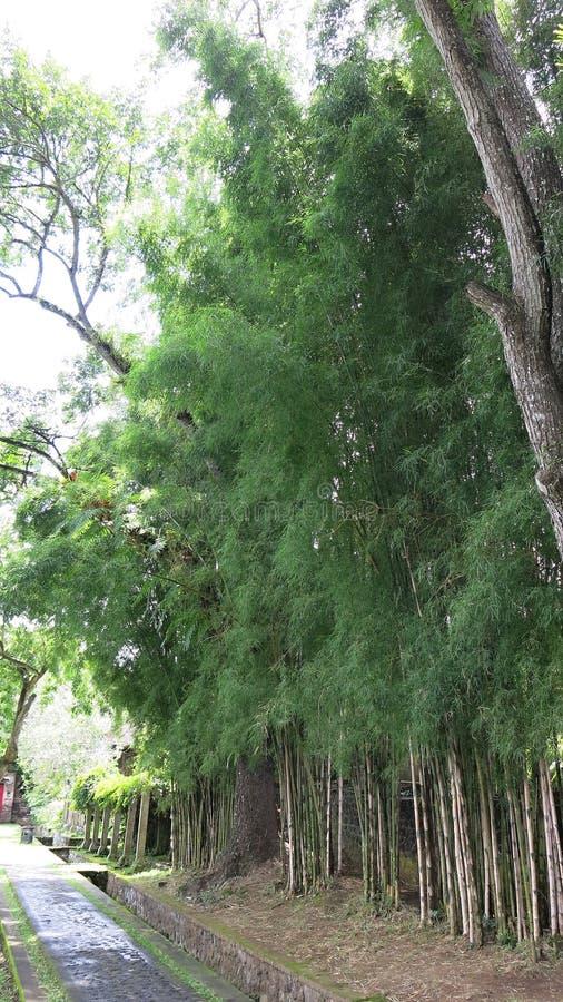 Promenad i tropisk trädgård Den tropiska trädgården med gömma i handflatan och många färgrika blommor royaltyfria foton