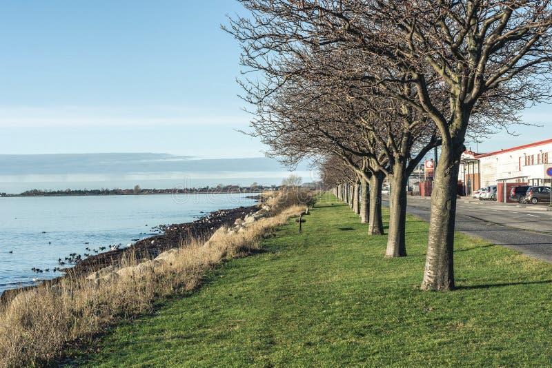 Promenad med grönt gräs och träd och blått hav royaltyfri fotografi