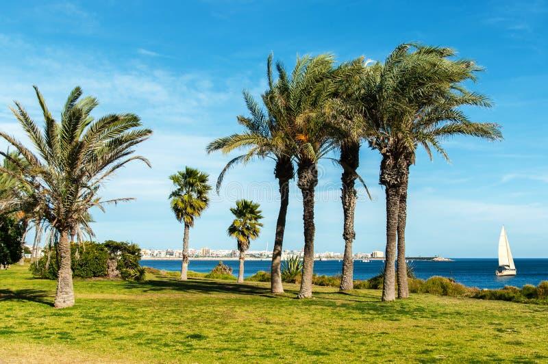Promenad med palmträd arkivbild
