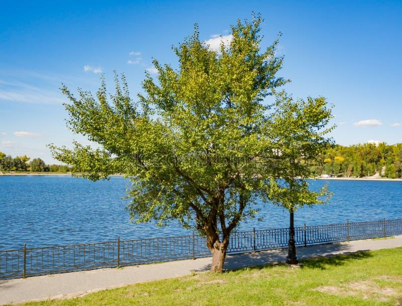 Promenad vid sjön med ett träd royaltyfri fotografi