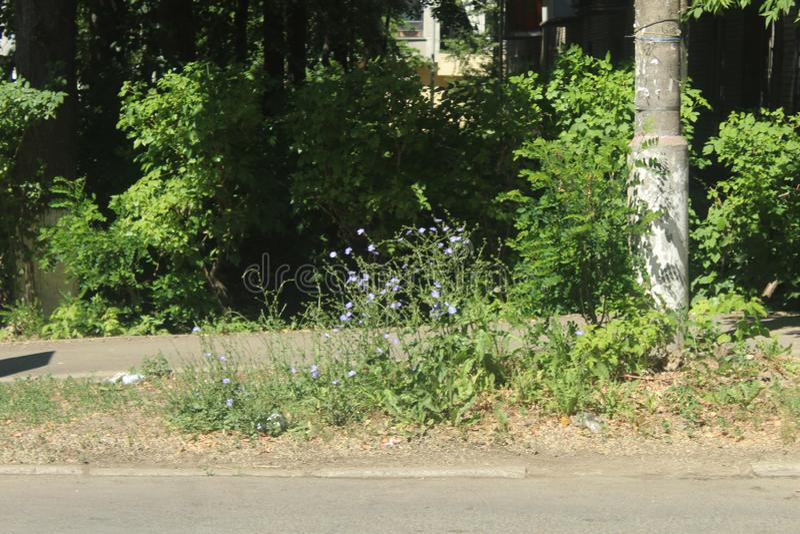 Promenade à Korolev Fleurs de juin photo libre de droits