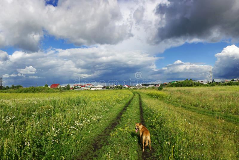 Promenade à travers le champ avec un chien photos libres de droits