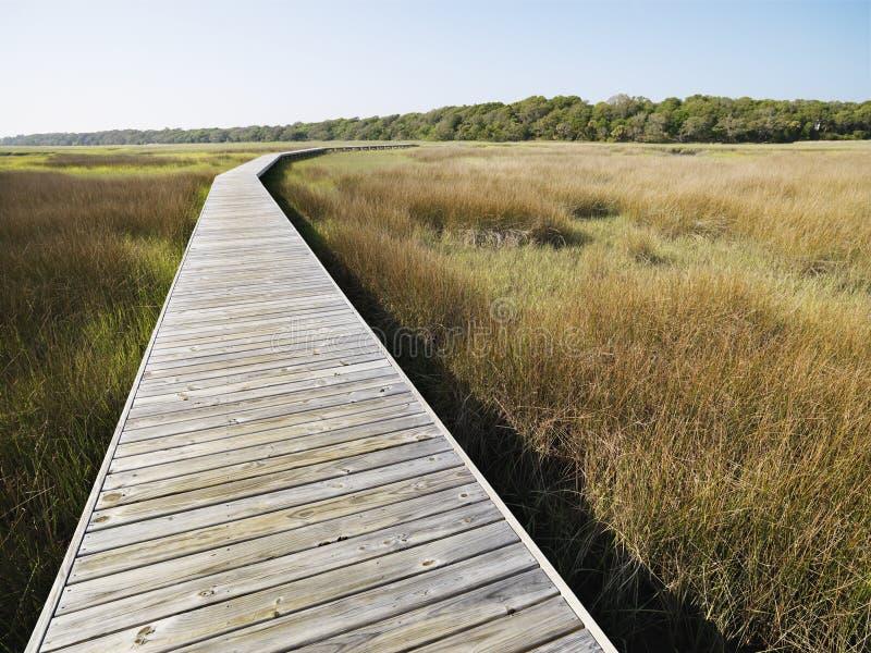 Promenade bij moeras. royalty-vrije stock afbeeldingen