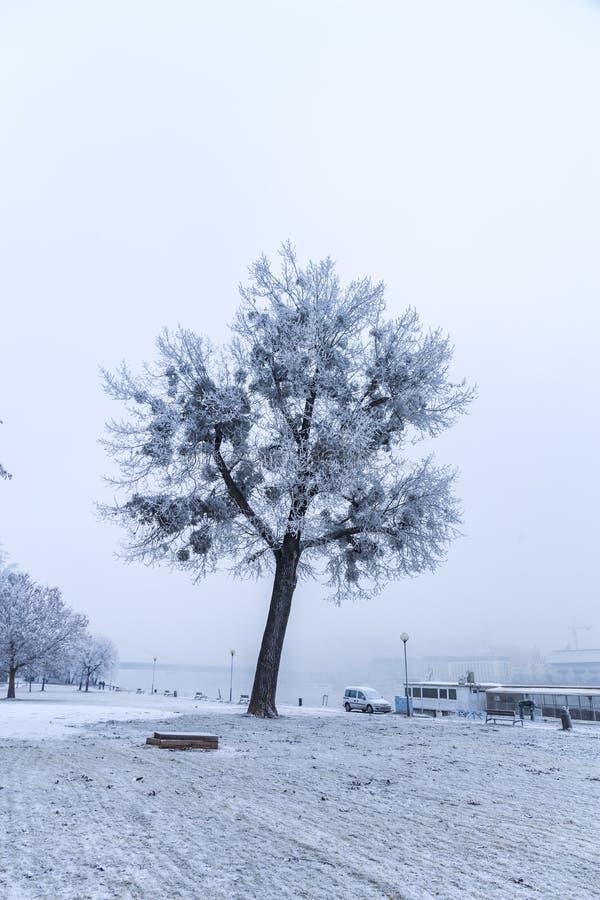 Promenade in Bratislava park in a snowy winter day, Sad Janka Kr royalty free stock images
