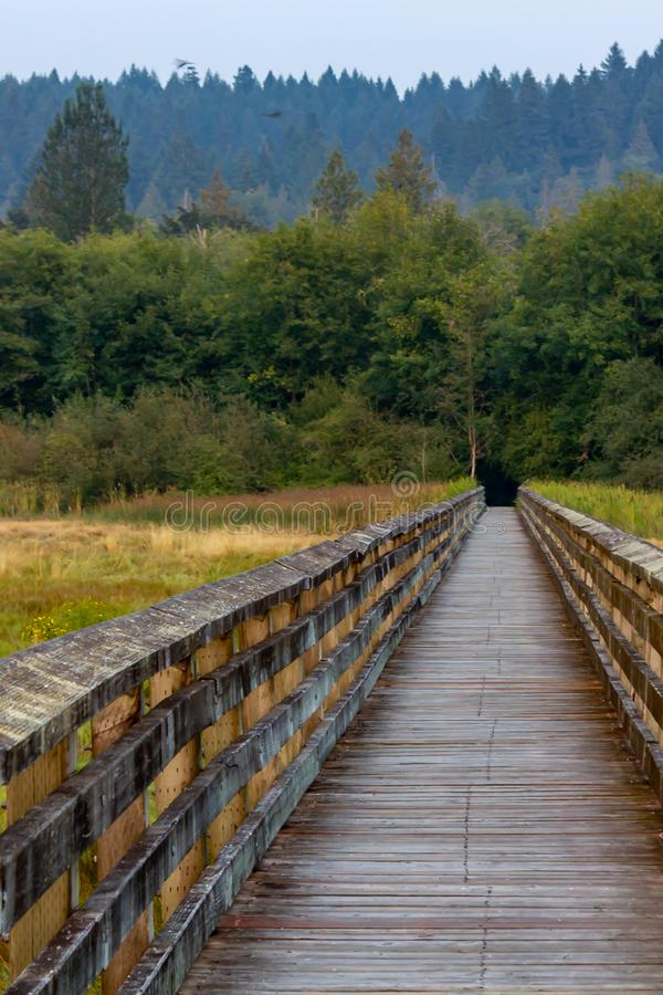promenade d'été s'étendant au-dessus des marécages et des herbes photos stock