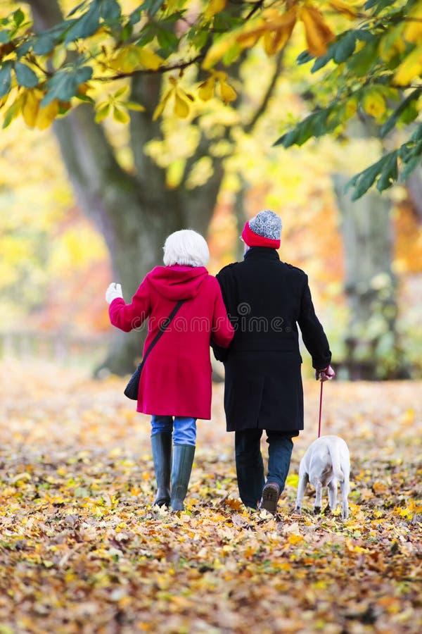 Promenade d'automne avec le chien photo stock