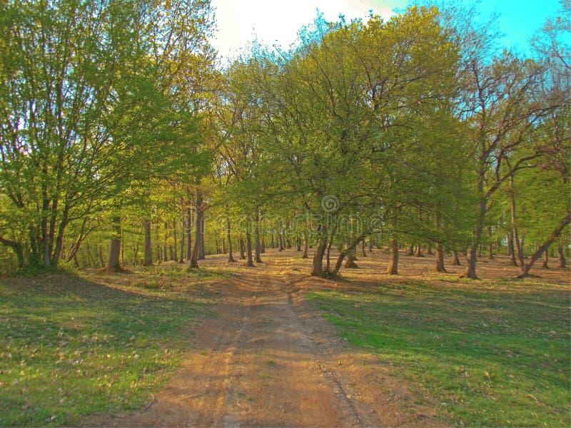 Promenade dans la forêt images libres de droits
