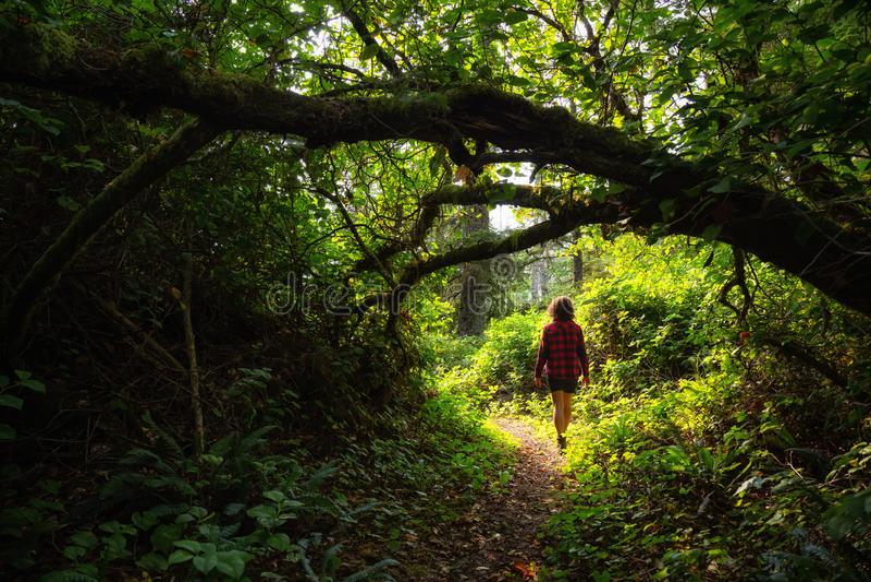 Promenade dans la forêt tropicale photographie stock