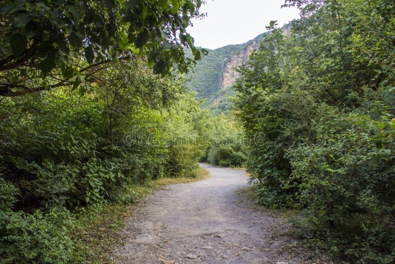 Promenade dans la jungle de la traînée 5 à Islamabad photos libres de droits