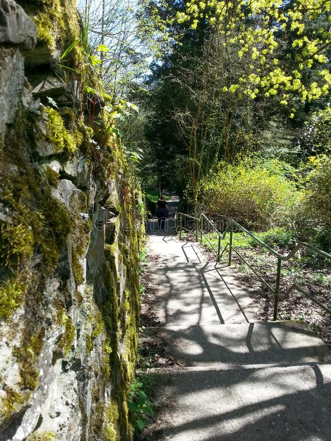 Promenade dans la nature fotografie stock