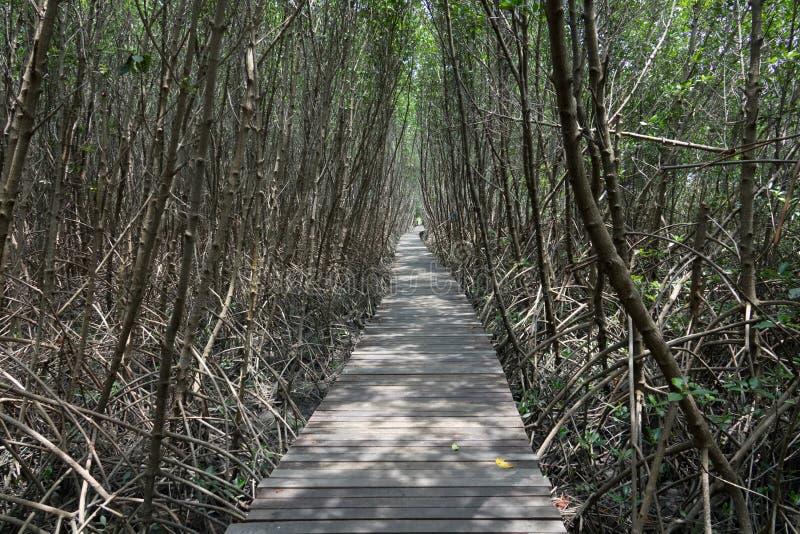 Promenade dans la nature photo libre de droits