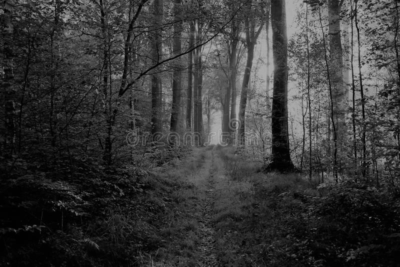 Promenade dans le blaton Belgique de forêt images stock