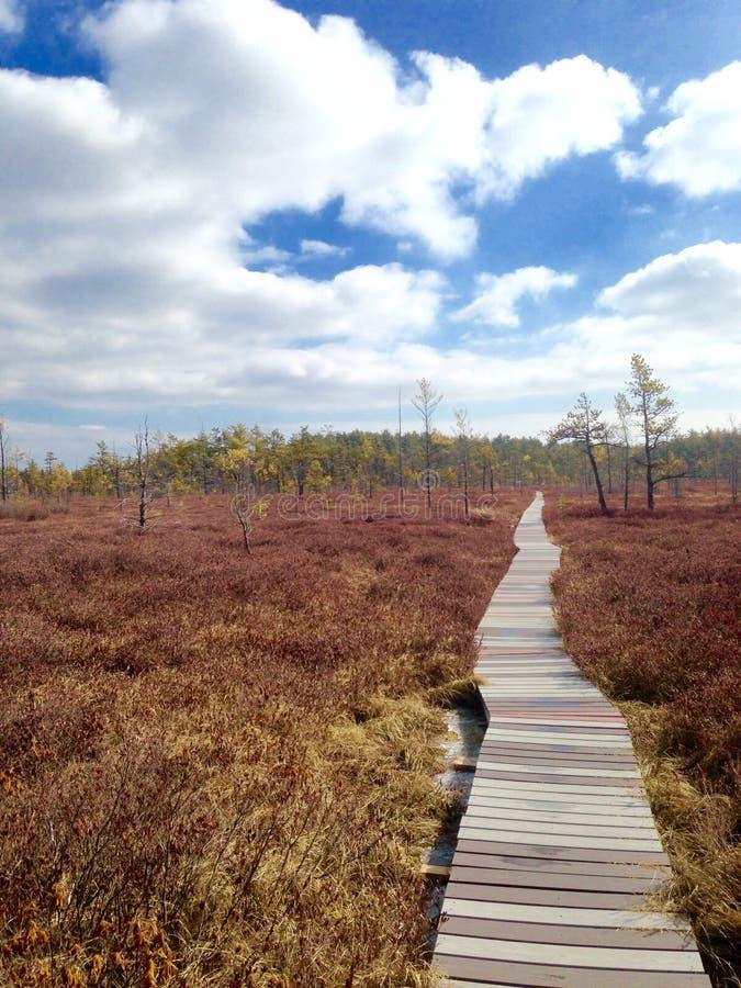 Promenade dans une région boisée photo libre de droits