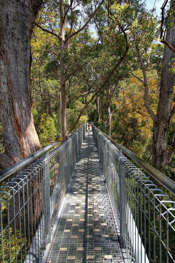 Promenade de dessus d'arbre images stock