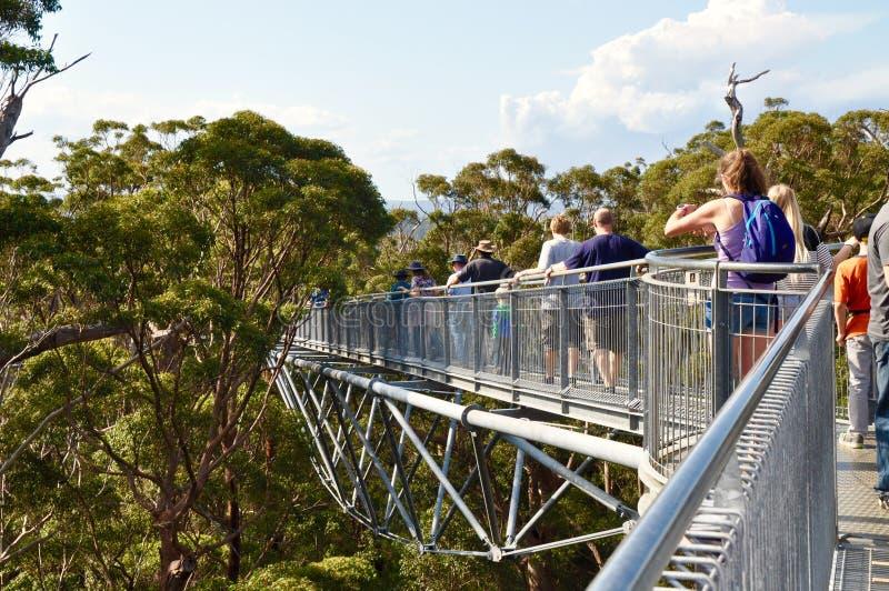Promenade de dessus d'arbre dans la forêt d'arbre de tintement : Le Danemark, Australie occidentale photographie stock