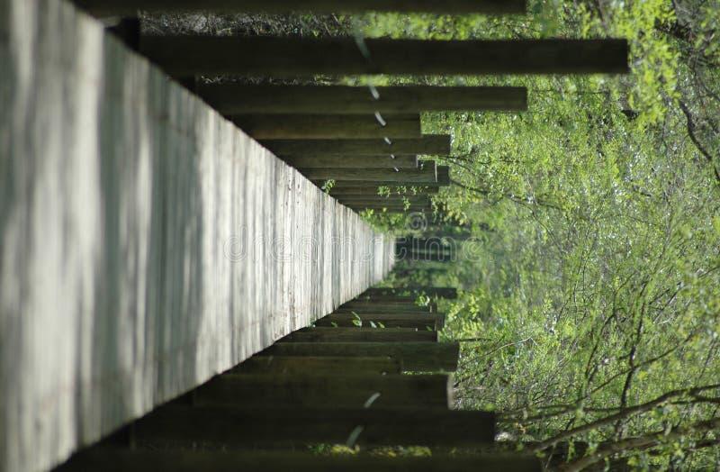 Download Promenade De Fleuve De Suwannee Image stock - Image du marche, wooden: 738241