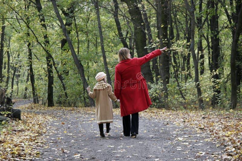 Promenade de forêt photographie stock libre de droits