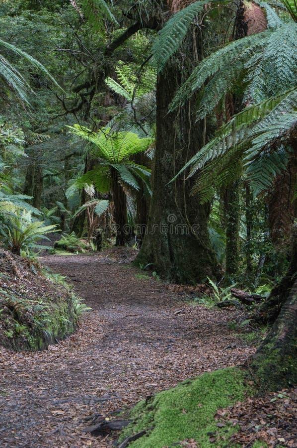 Promenade de forêt de Te Urewera National Park photo libre de droits