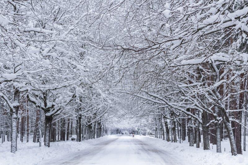 Promenade de l'hiver photos stock