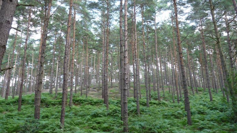 Promenade de région boisée image libre de droits