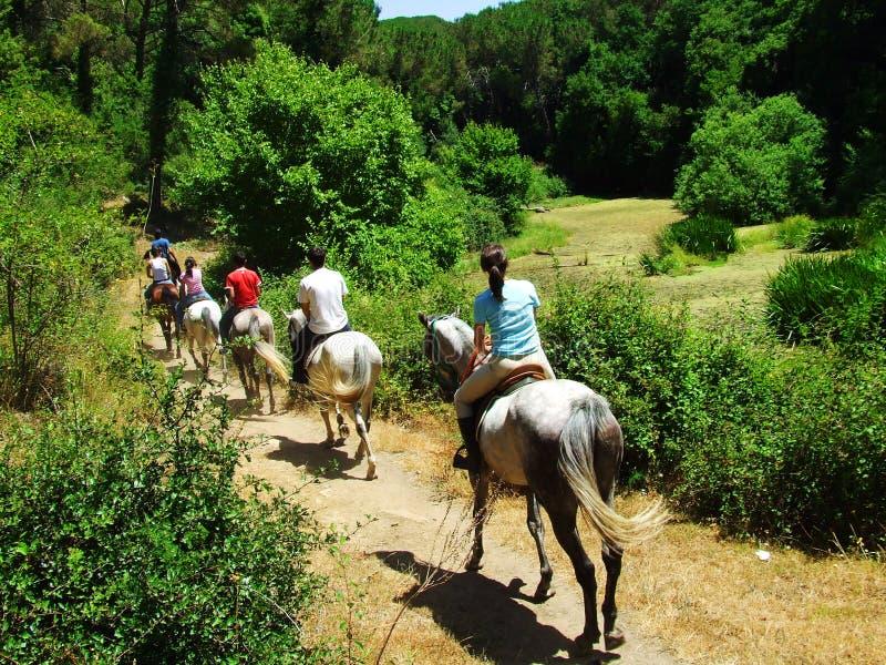 'promenade' del caballo fotografía de archivo libre de regalías