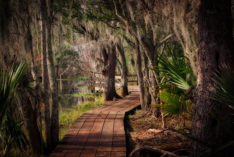 Promenade durch einen Louisiana-Sumpf stockfoto