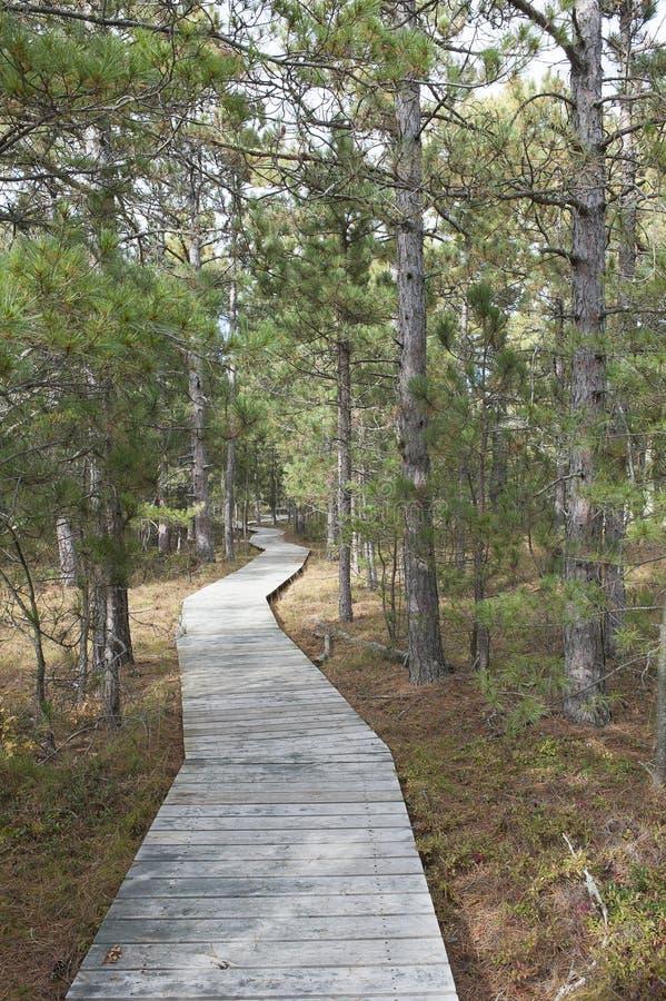 Promenade durch Wald stockbilder