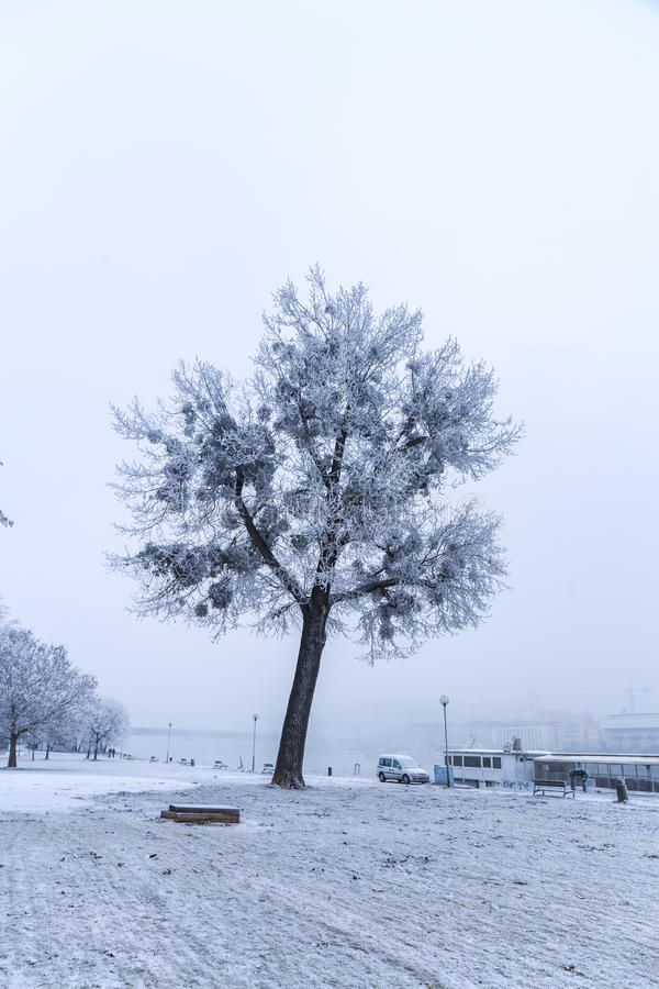 Promenade en parc de Bratislava dans un jour d'hiver neigeux, Janka Kr triste images libres de droits