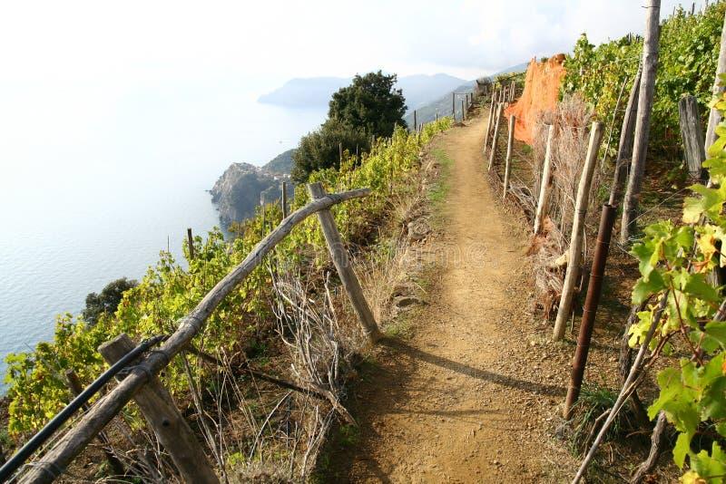 Une promenade gentille par la cour de vin par la mer images libres de droits