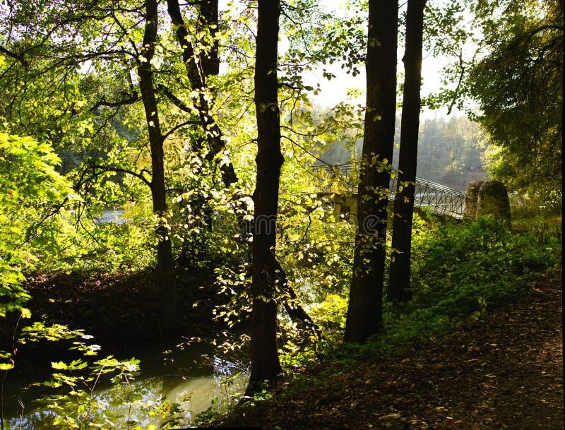 Promenade in het bos - Plitvice stock fotografie