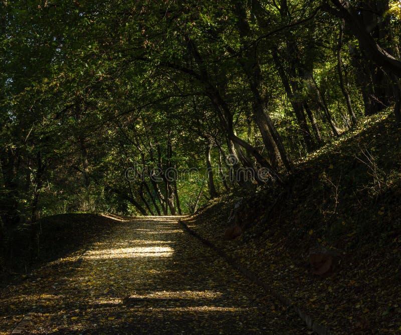 Promenade in het stadspark dat met bomen wordt behandeld royalty-vrije stock afbeeldingen