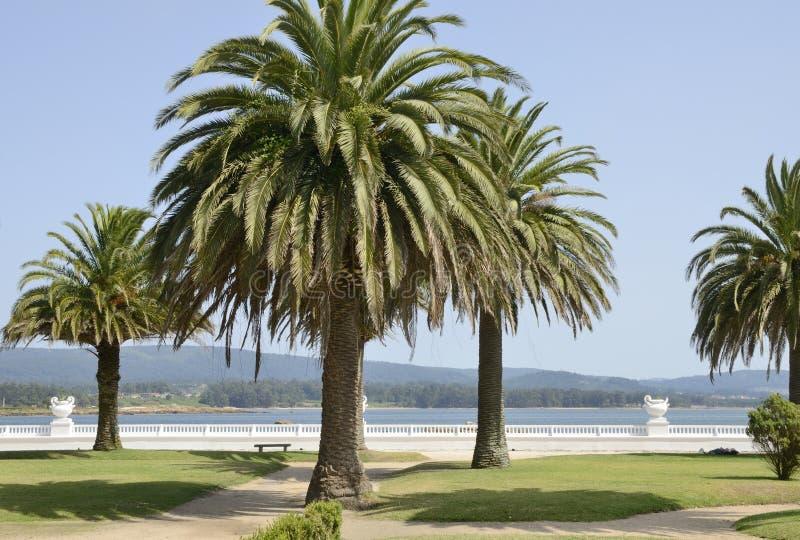 Promenade in the island of La Toja. Galicia, Spain stock photo
