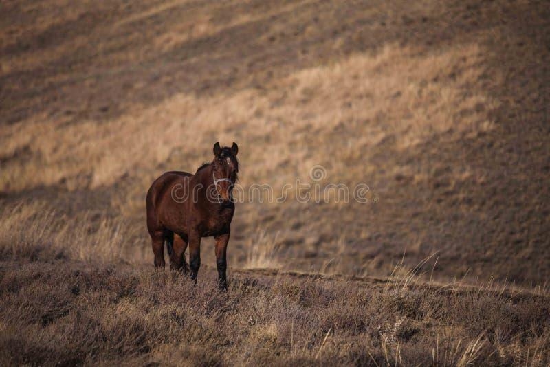 Promenade isolée de cheval sur un flanc de coteau images stock