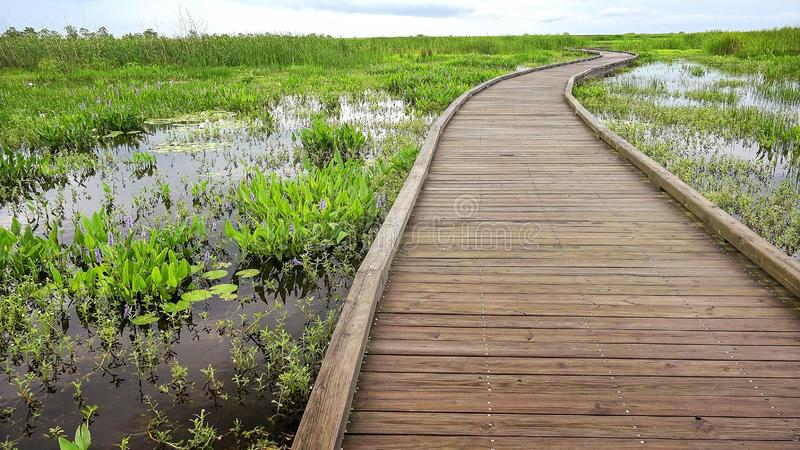 Promenade kurvt durch einen Sumpf und Sumpfgebiete in Louisia stockbilder