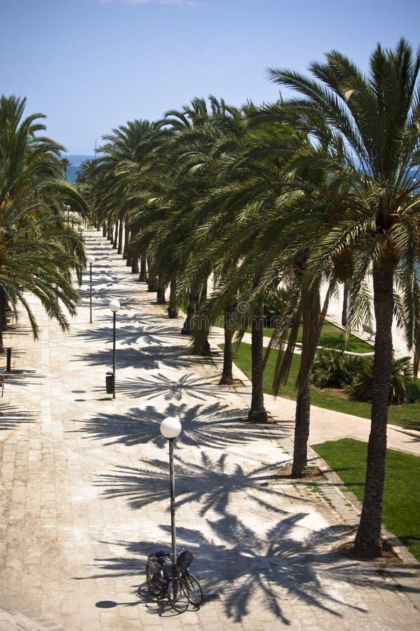 Download Promenade in Majorca stock image. Image of city, majorca - 17852165