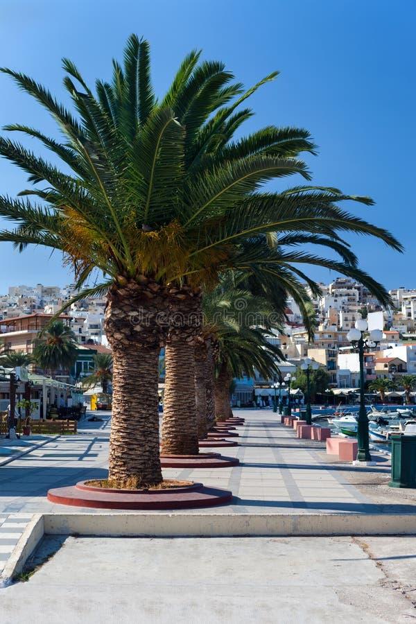 Download Promenade mit Palmen stockfoto. Bild von berg, haus, baum - 27727244