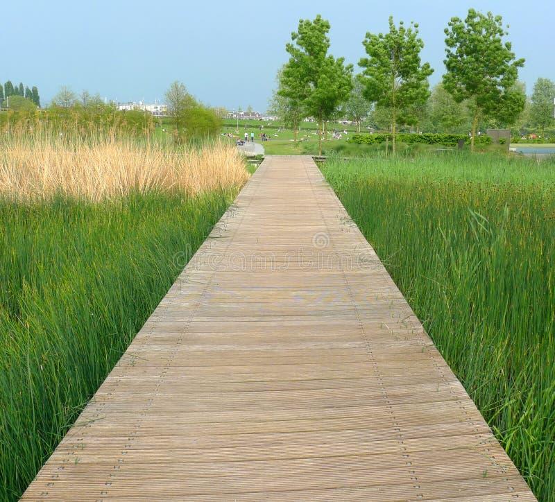 Promenade op het moeras royalty-vrije stock afbeelding