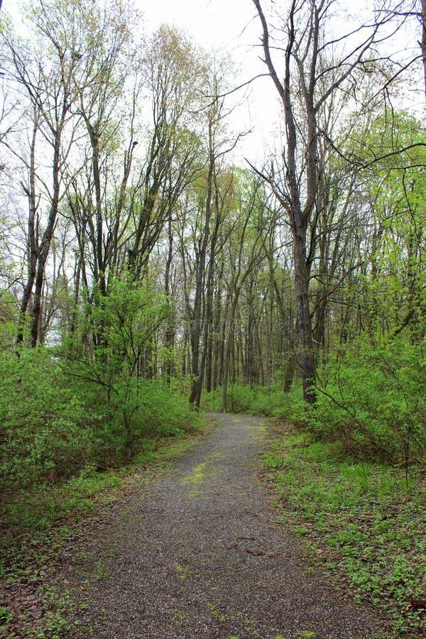 Promenade paisible dans les bois avec des rangées des arbres nu-embranchés rayant les deux côtés de voie photos libres de droits