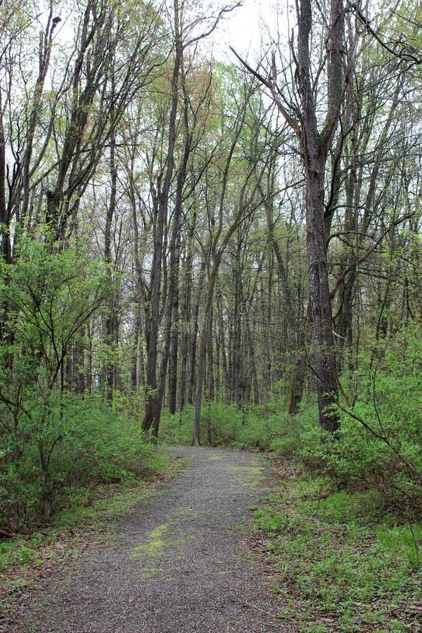Promenade paisible dans les bois avec des rangées des arbres nu-embranchés rayant les deux côtés de voie photo libre de droits