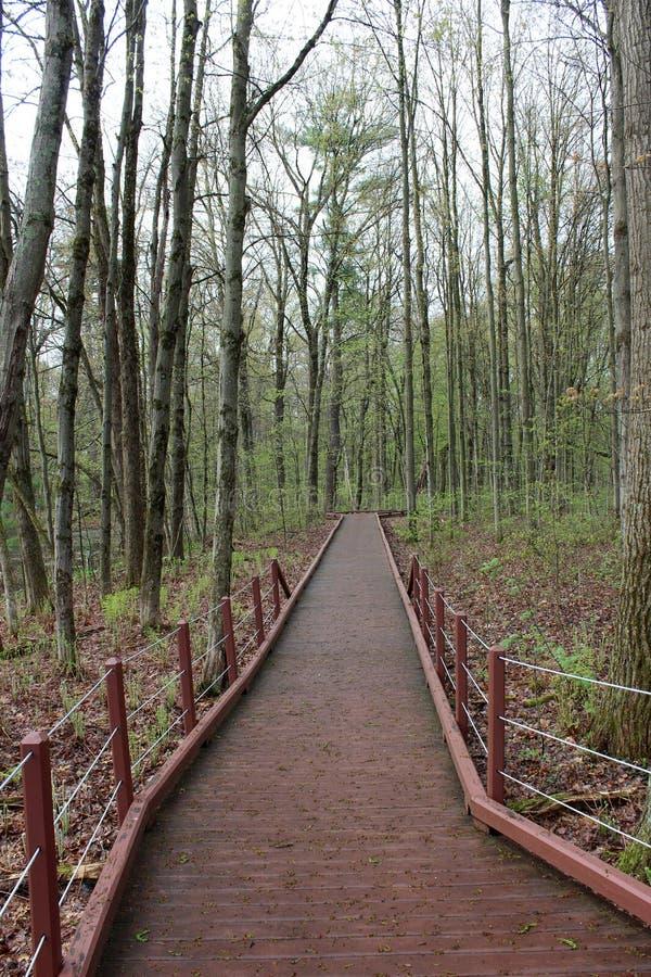 Promenade paisible dans les bois avec des rangées des arbres nu-embranchés rayant les deux côtés de voie en bois avec des balustr photos libres de droits