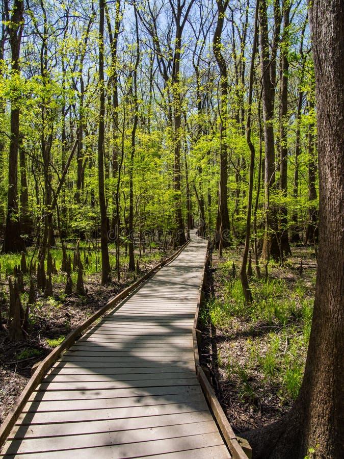Promenade par des forêts de bois dur, parc national de Congaree photo libre de droits