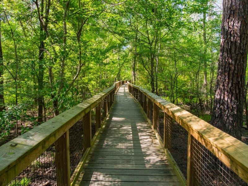 Promenade par des forêts de bois dur, parc national de Congaree image stock