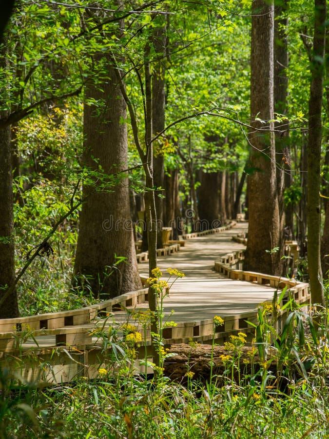 Promenade par des forêts de bois dur, parc national de Congaree photographie stock libre de droits