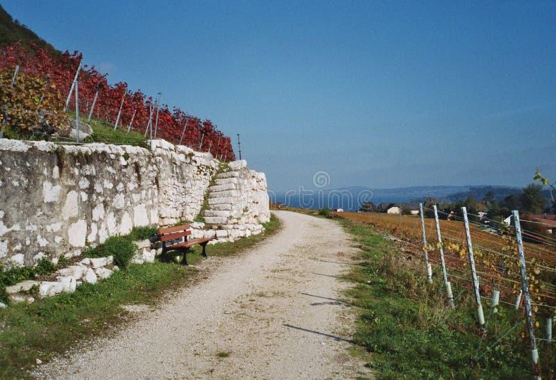Promenade par des vignes photo libre de droits