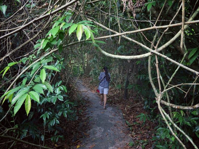 Promenade par la forêt de nature photo stock