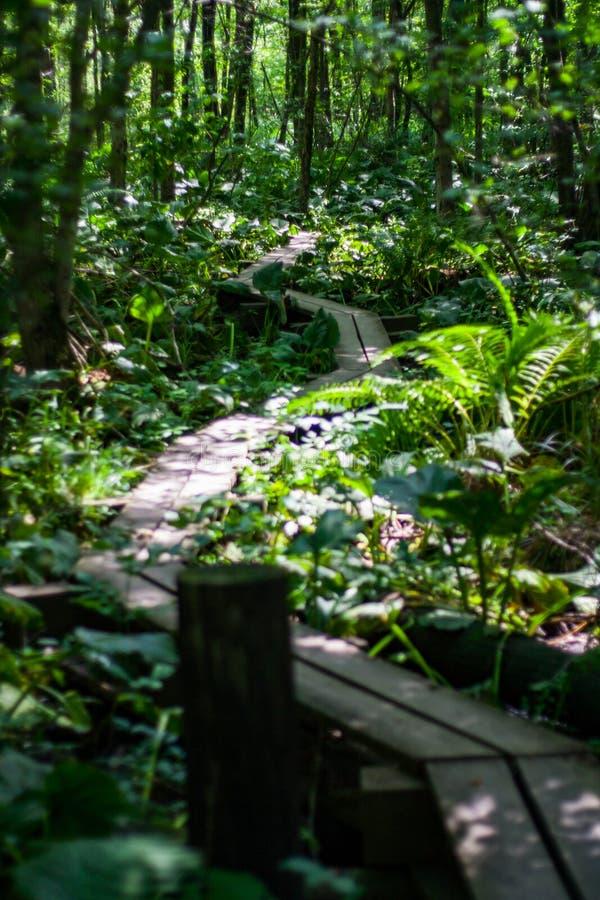 Promenade par la forêt luxuriante, traînée appalachienne image libre de droits