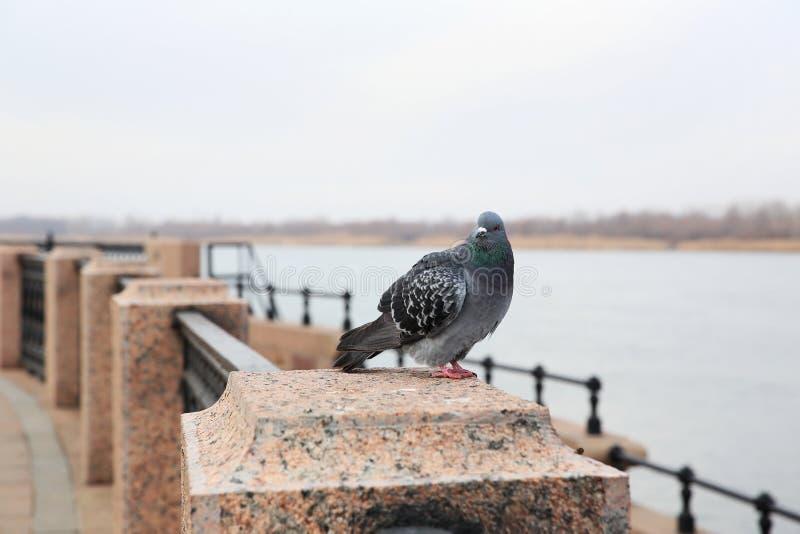 Promenade van Volga rivier, Astrakan, Rusland stock afbeelding