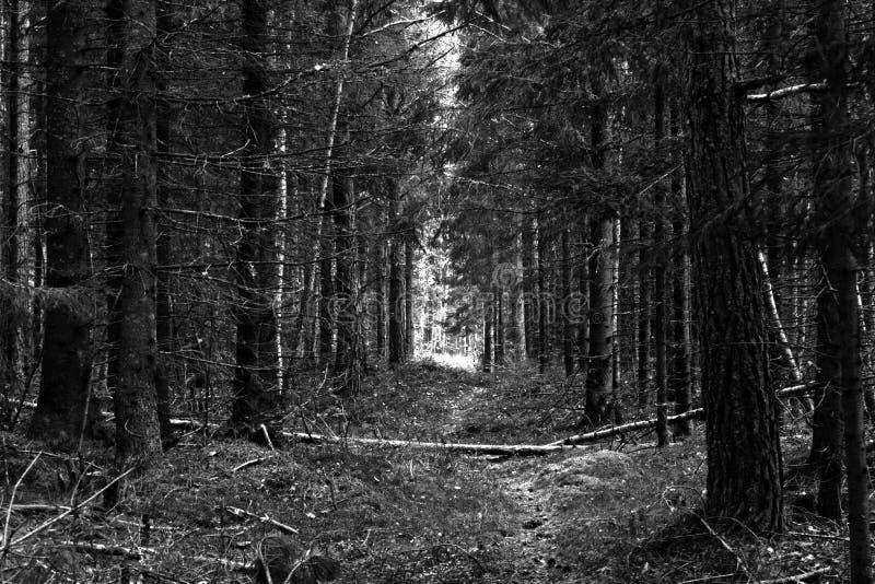 Promenade vers les lumières images stock