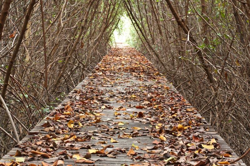 Promenade zwischen Mangrovewald stockfotografie