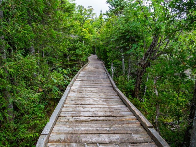 Promenaden-Spur durch üppigen Wald, Baxter State Park stockbilder